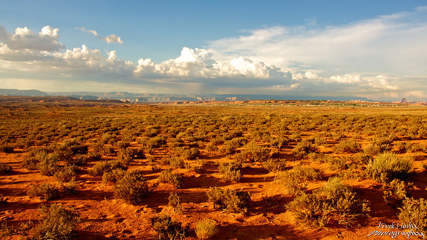 Arizona Desert Plants