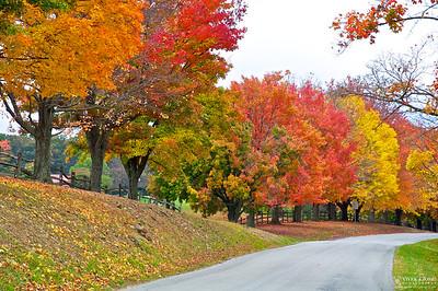 Linn Run State Park, PA