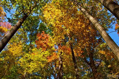 Beautiful Falls Colors -Laurel Hill State Park, PA