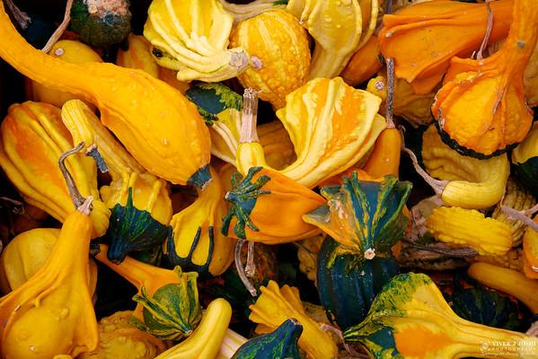 Fall Pumpkin Sale