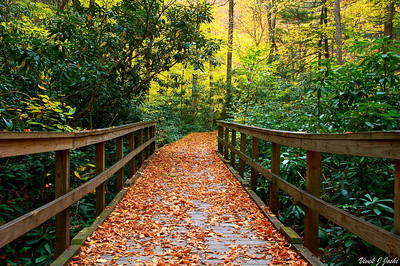 Boardwalk Trail Covered with Leaves to Dingmans Falls