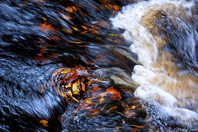 Nice Falls Colored Leaves in Stream