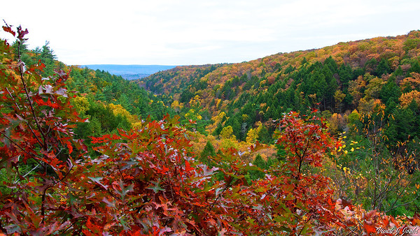 Fall Colors From Delaware Valley Lookout