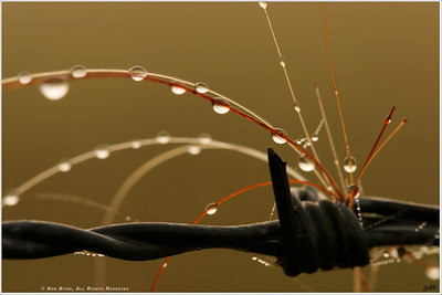 """""""Twist of Fate"""" Back lit by the rising sun through a dense fog, the ingredients: barbed wire, horse hair and morning dew; intertwine for a moment in time."""