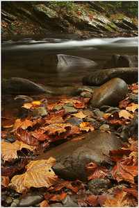"""Seasonal Surrender"" Late Fall on an overcast day in the Great Smoky Mountains National Park."