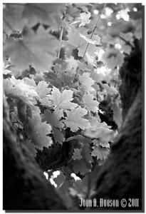 1432_2000030-R6-C2-NCS-Nature