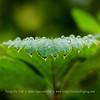 Efecto embellecedor de la lluvia enn flores y hojas<br /> Flores y plantas