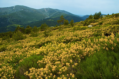 Primavera en la Sierra.