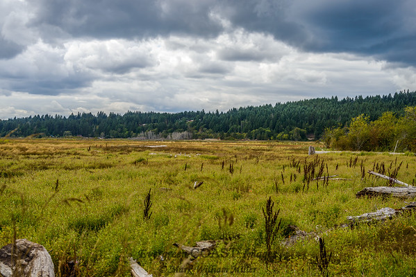 Wetland Sky 2
