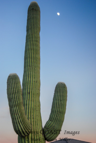 Moon and Saguaro over Green Valley