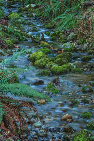 Cougar Mountain stream