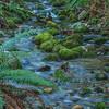 Cougar Mountain stream