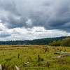 Wetland Sky 1