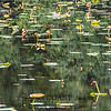 Padded pond