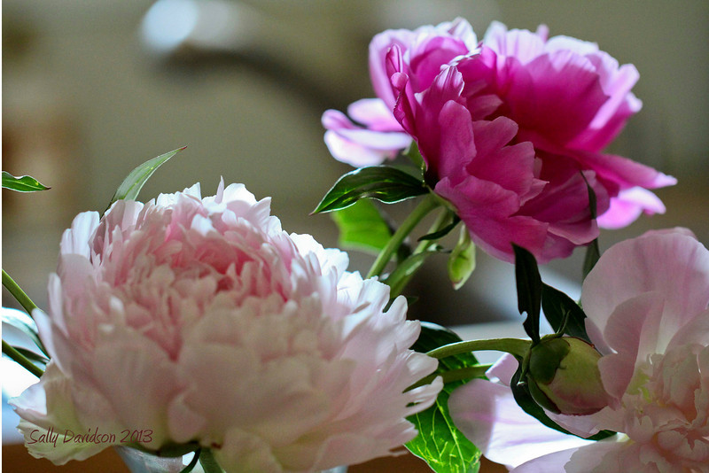 Soft Flowers for Quiet Afternoons