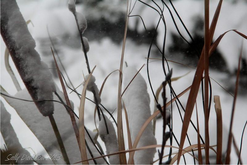 Winter Foliage in Snow