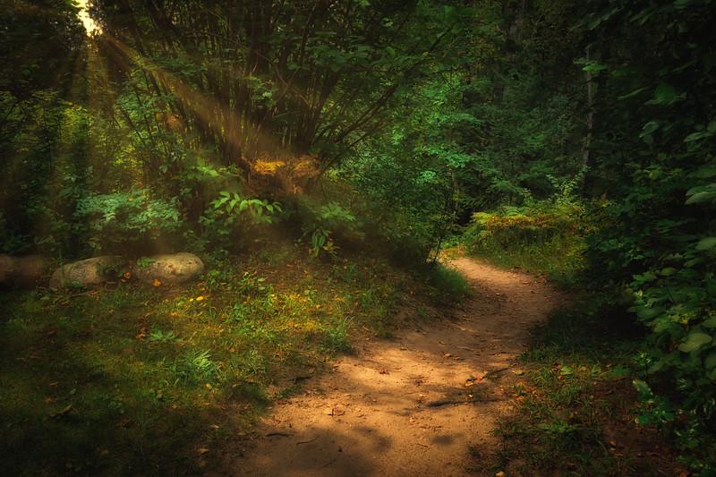 Path in Sun