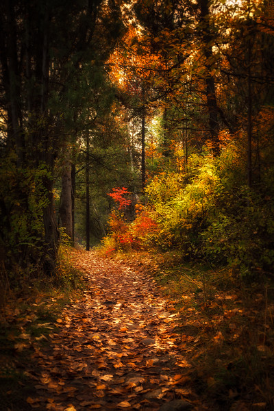An Autumn Path