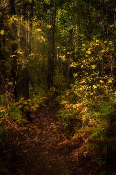 A Sunlit Path