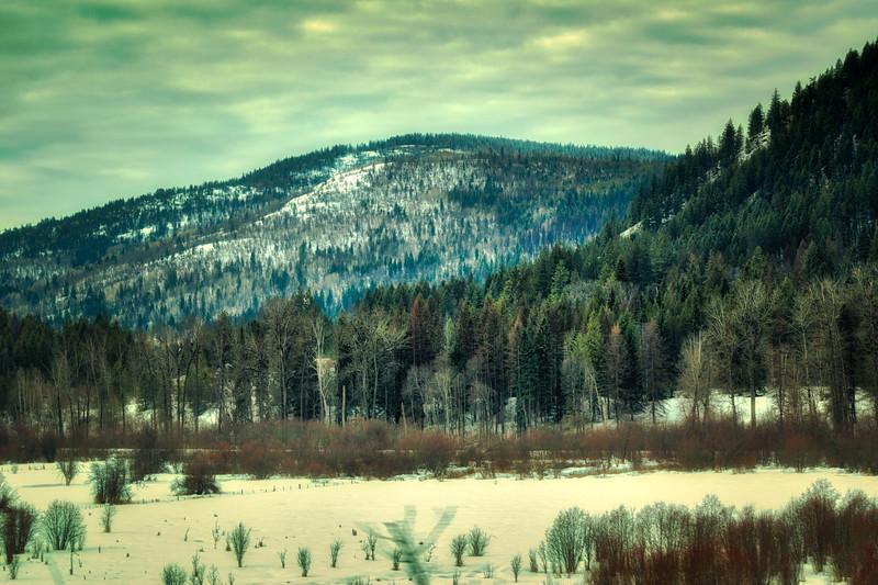 Winter Field
