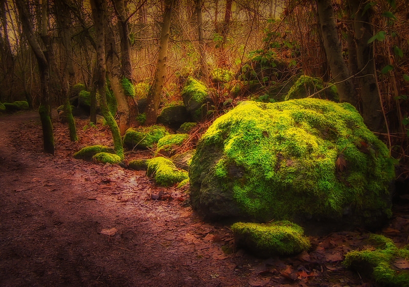 Boulder and Moss