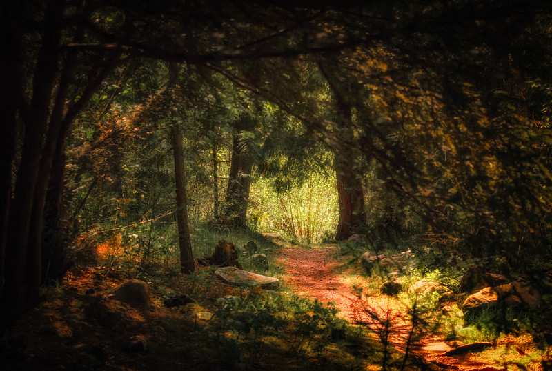 A Dreamy Path