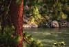 Kootenay River Zen