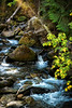 Creek Comforts