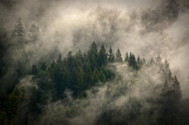 Morning Mountain Mist