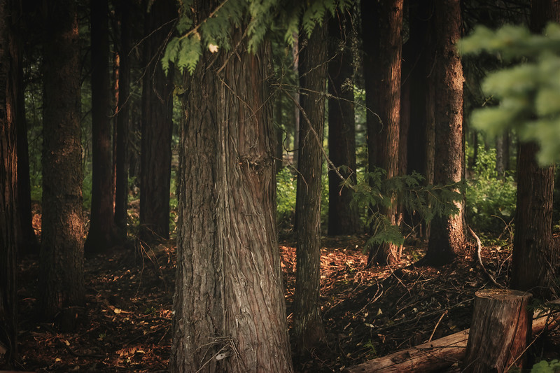 Enchanting Woods