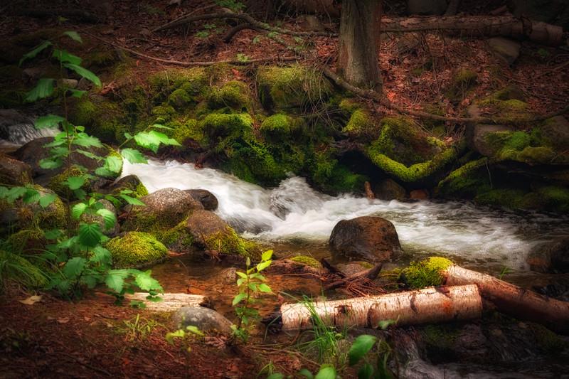 Tulip Creek in Spring