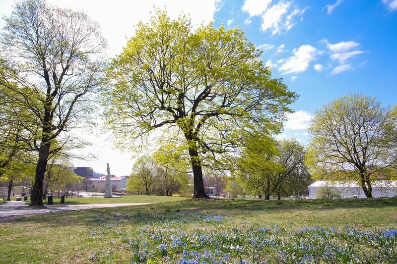 Ola Narr våren 2019