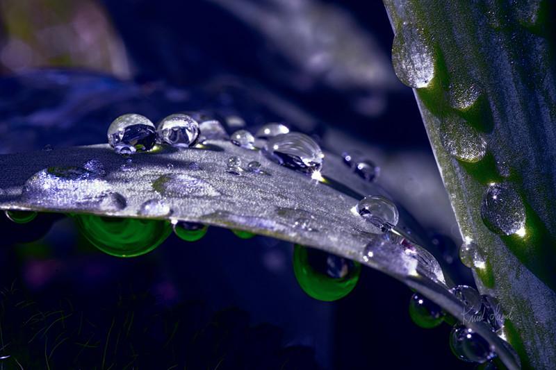 Regndråper