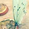 Butterfly pastel