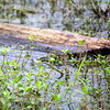 Lake Martin, Louisiana 022017 163