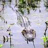 Lake Martin, Louisiana 022017 169
