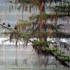 Lake Martin, Louisiana 032317 047