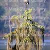 Lake Martin, Louisiana 032317 099