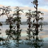 Lake Martin, Louisiana 032317 074