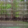 Lake Martin, Louisiana 032317 029