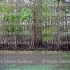 Lake Martin, Louisiana 032317 030