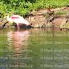 Rip's Rookery, Jefferson Island, La 032317 094