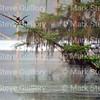 Lake Martin, Louisiana 032317 050