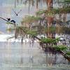 Lake Martin, Louisiana 032317 049