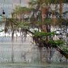 Lake Martin, Louisiana 032317 053