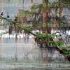 Lake Martin, Louisiana 032317 048