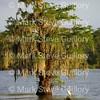 Lake Martin, Louisiana 041517 016