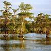 Lake Martin, Louisiana 041517 018