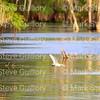 Lake Martin, Louisiana 041517 020