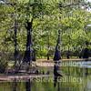 Lake Martin, Louisiana 042117 007